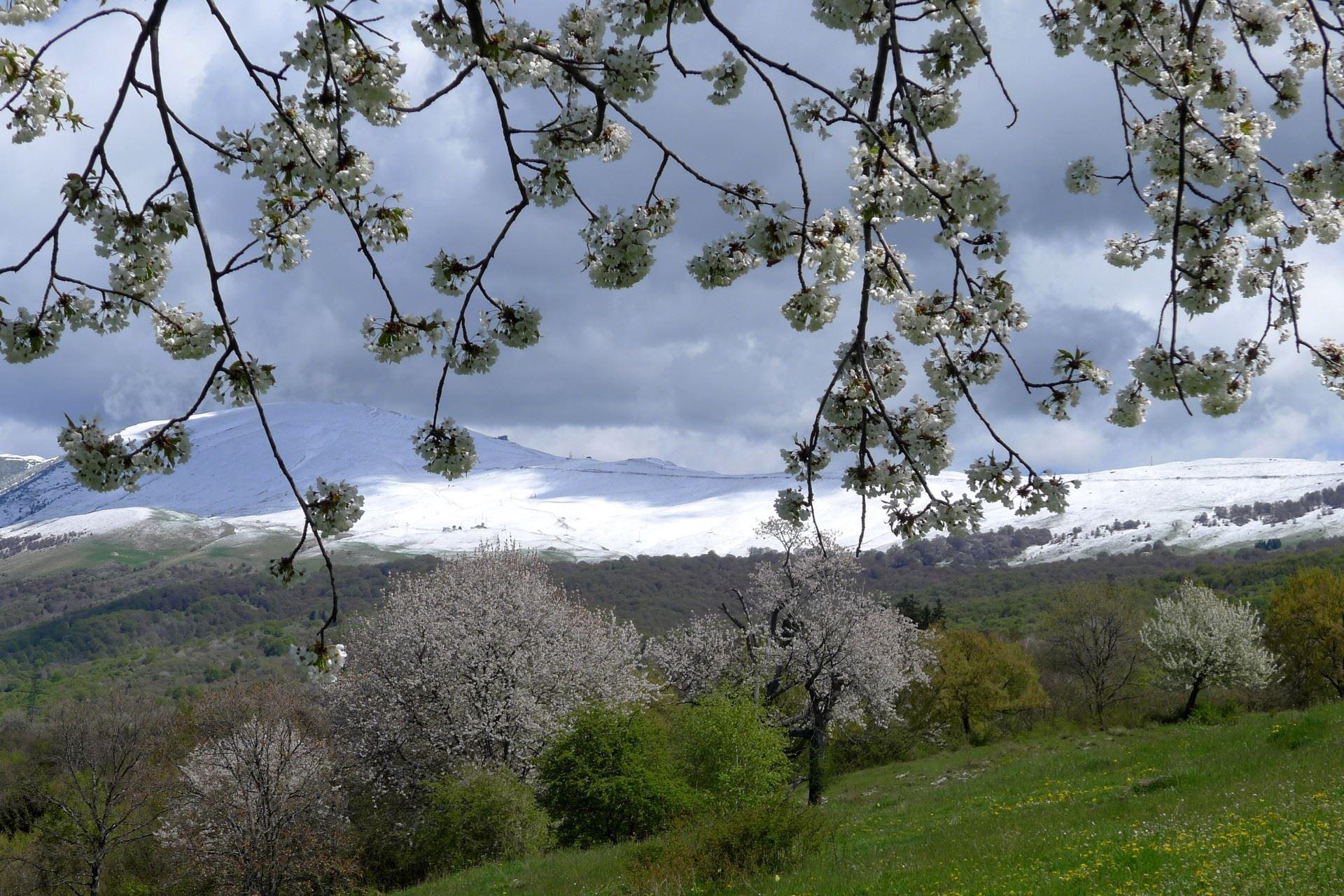 Aprile 2017 - Nella foto del mese di aprile di Vittore Giardini, due stagioni si incontrano. Dopo una prima parte del mese caratterizzata da temperature ben al di sopra della norma, nella seconda metà di aprile la neve è ricomparsa sulle cime del Monte Baldo.